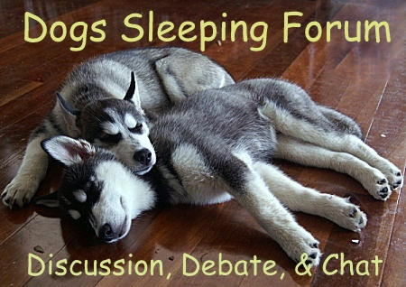 Dogs Sleeping Forum. I don't advise joining Dogs 'hun' it's as rough as fuck